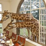 The Safari Collection | A fact finding breakfast