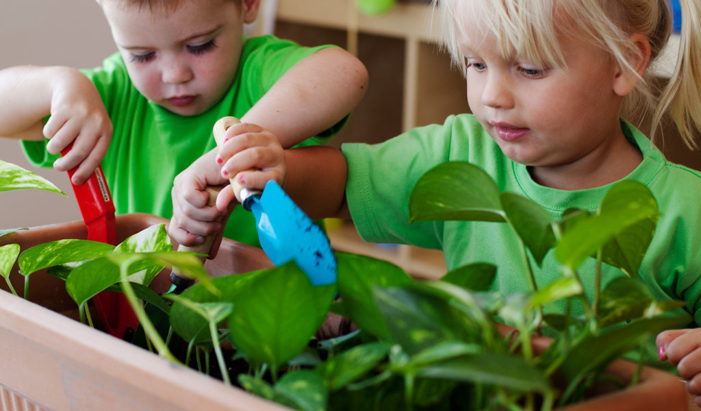 Home Grown Eco Nursery Dubai