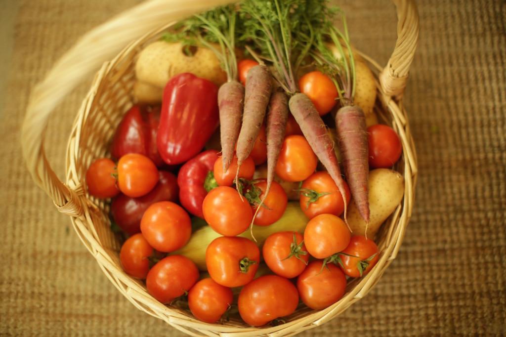 Greenheart organic farm Elena Kinane2