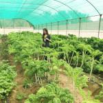 Intelligent Luxury | My visit to Greenheart Organic Farms